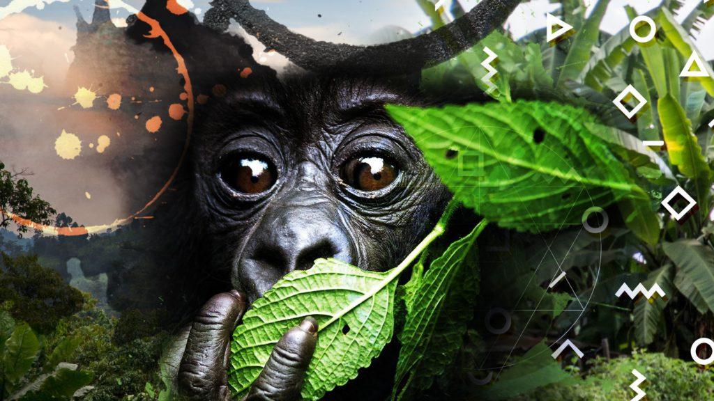 Gorilas -Ratpanat