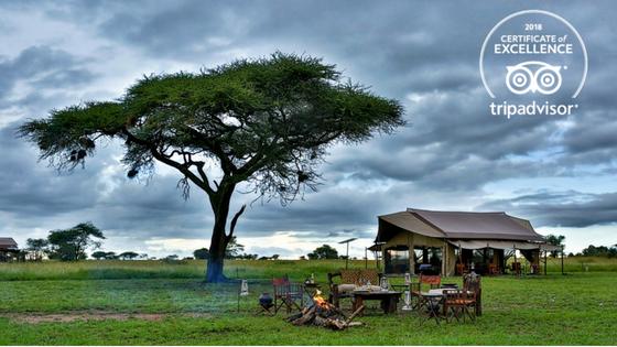 Pumzika Safari Camp recibe el Certificado de Excelencia de TripAdvisor